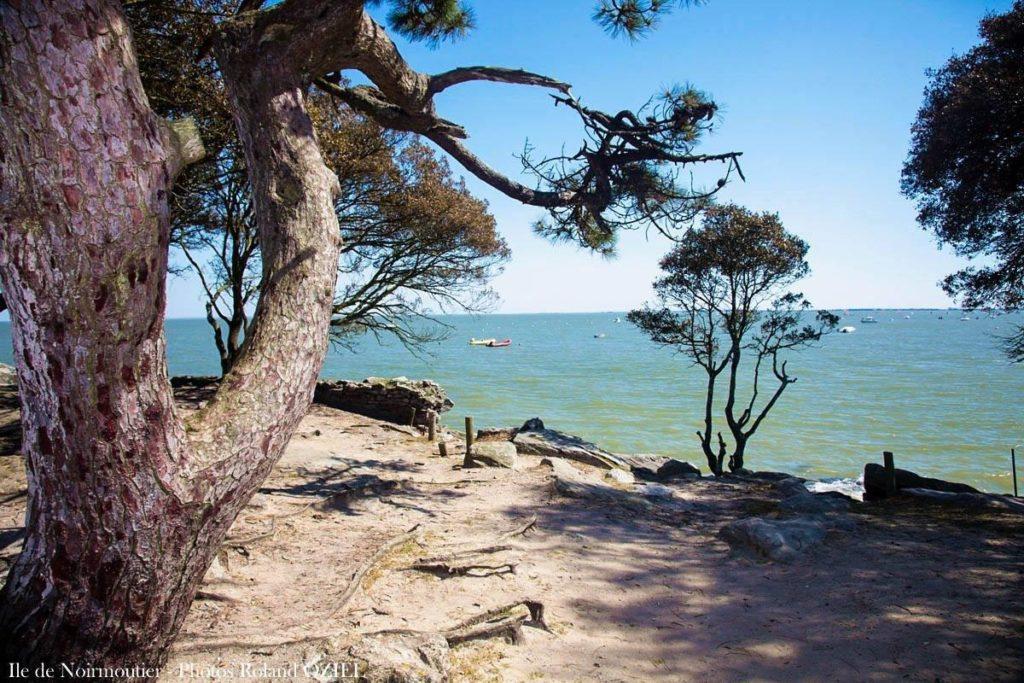 Noirmoutier  le bois de la chaize